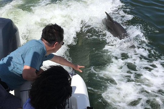 Dolphin Tours Fort Myers Beach Estero Bay