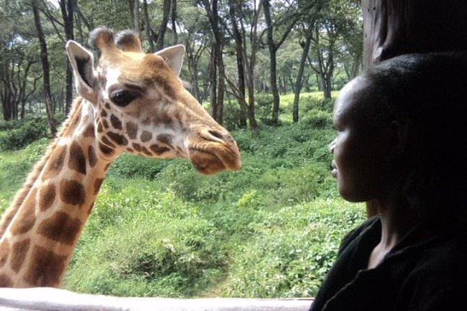 Tour to Giraffe Center from Nairobi