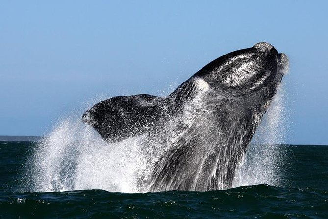 Whale Watching from Gansbaai