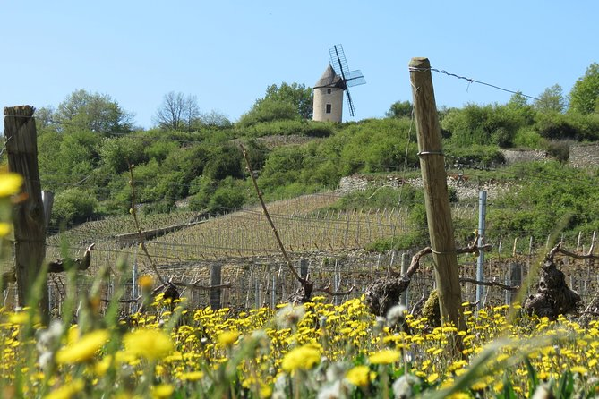 Private Wine Tour to Burgundy Region from Paris