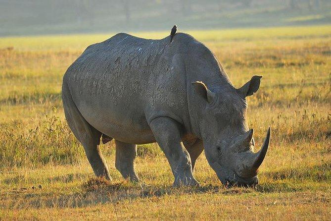 4-Day Masai Mara, L Naivasha and L Nakuru - Private safari