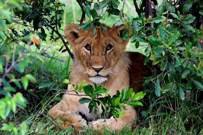3-Day Masai Mara and Lake Naivasha - Private safari