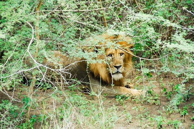 3 Days Trip To Murchison Falls