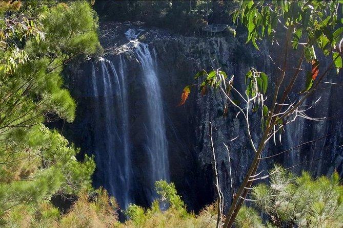Byron Bay Hinterland Tour Including Rainforest Walk to Minyon Falls
