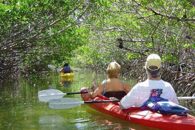 Key West Mangrove Kayak Eco Tour