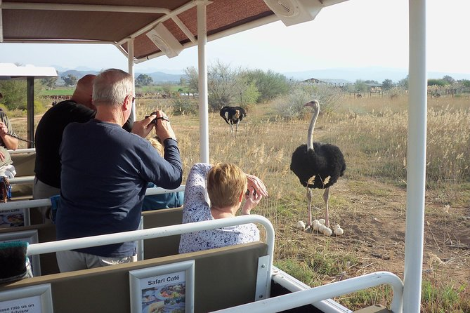 Safari Ostrich Farm Tractor Tour the only Tractor Safari in Oudtshoorn