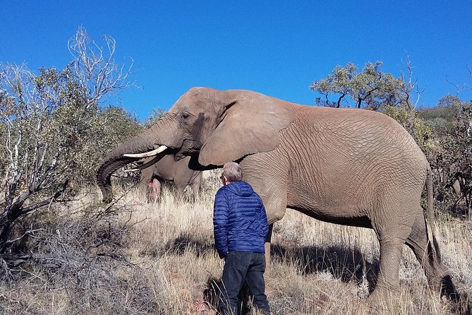 Elephant Walk Guided Tour from Johannesburg