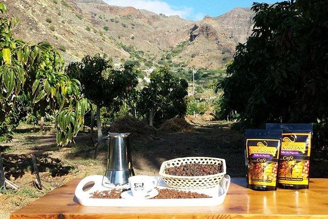 Coffee Tour at Finca los Castaños in Gran Canaria