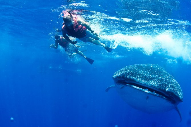 Whale Shark All-Inclusive Tour in Cancun & Riviera Maya