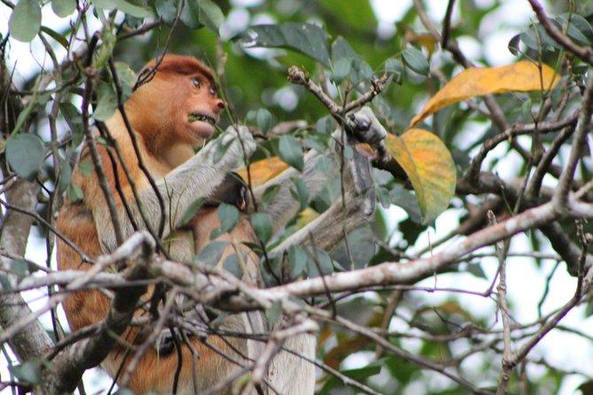 Klias River Nature and Wildlife Cruise from Kota Kinabalu Including Fireflies Watching