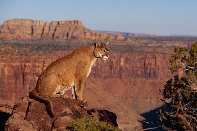 Custom Private Arizona Wildlife Adventure