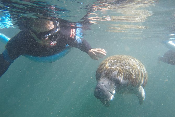 Small group Manatee snorkeling tour with in water guide