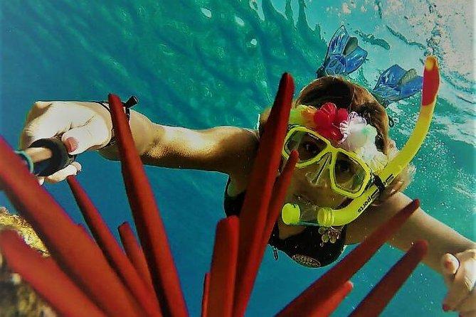 Molokini Crater Zodiak Adventure Snorkel and Turtle Cove Swim