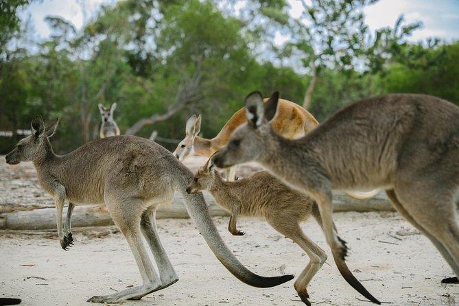 Visit Walkabout Wildlife Sanctuary