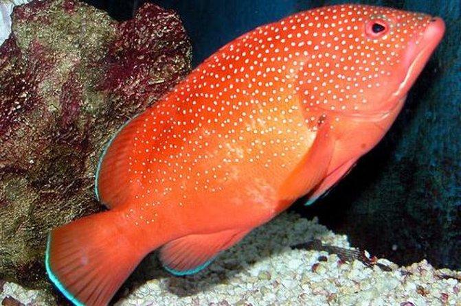 Key West Aquarium Admission Ticket