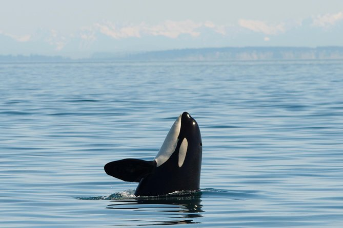 San Juan Island Whale and Wildlife Tours