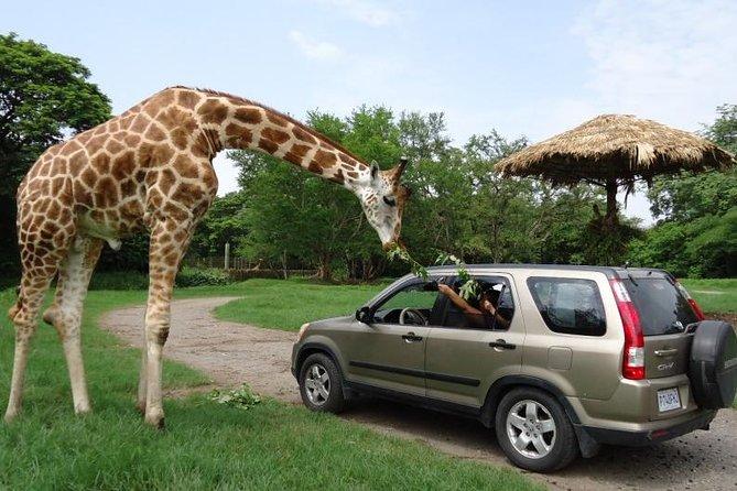2-Day Tour: Auto Safari Chapín Zoo and Monterrico Black Sand Beach from Guatemala City or Antigua