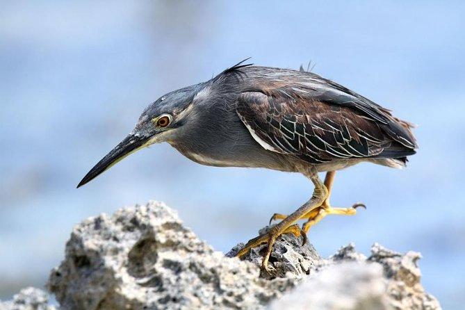 Olango Island Bird Watching and Snorkeling Day Trip from Cebu