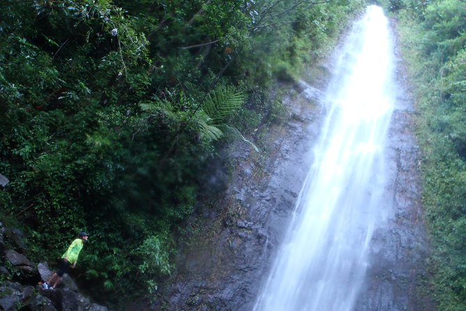 Manoa Waterfalls Run and Hike with Local Guide