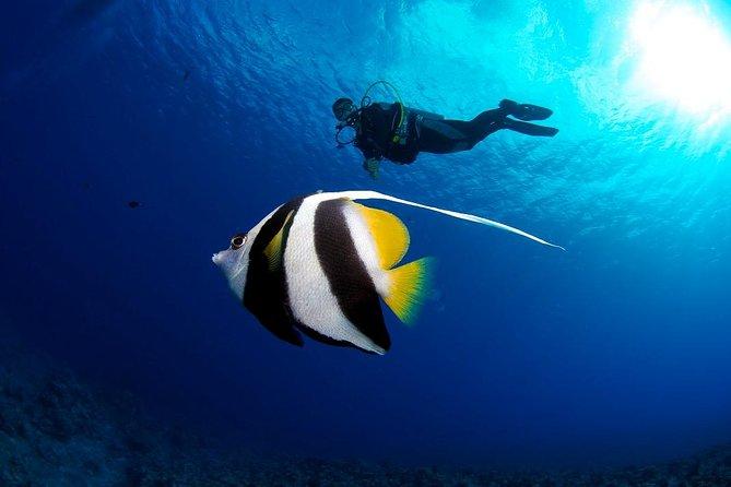 Bora Bora 2-Tank Certified Scuba Dive