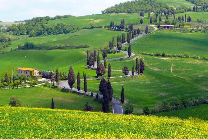 Pienza, Montalcino, Brunello Wine and Pecorino Cheese PRIVATE TOUR from Florence
