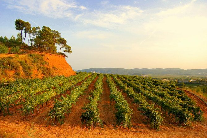 Barcelona Guided Local Wine Tasting Tour