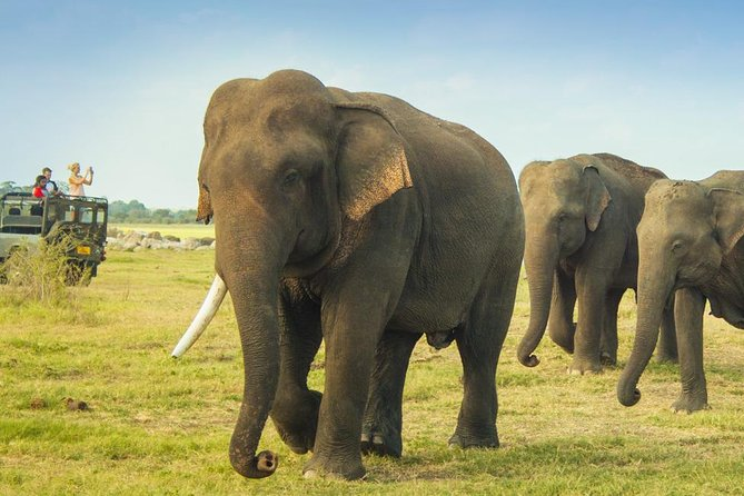 Private: Elephants, Animals & Bird watch Jeep Safari at Minneriya National Park