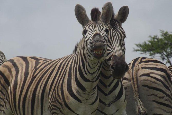 Durban Shore Excursion: Tala Game Reserve Tour