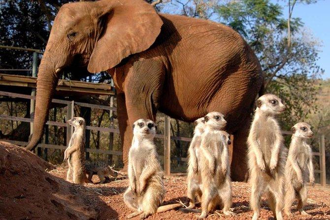 Elephant Sanctuary Tour from Johannesburg or Pretoria