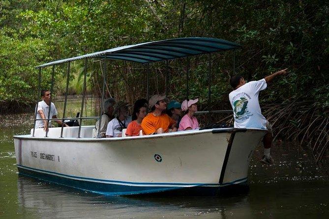 Damas Mangroove Boat Tour from Manuel Antonio