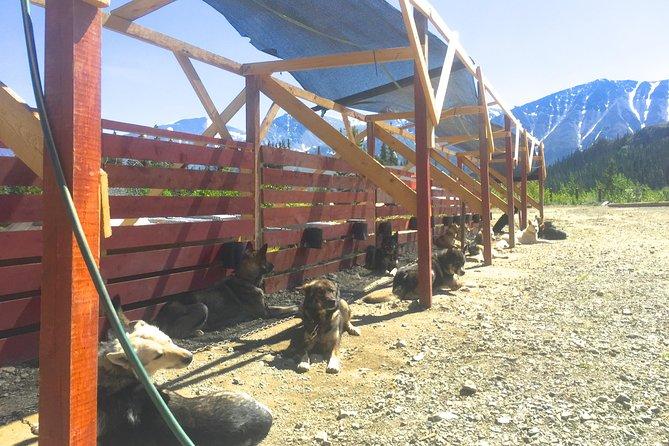 Yukon Dog Sledding Adventure in Skagway