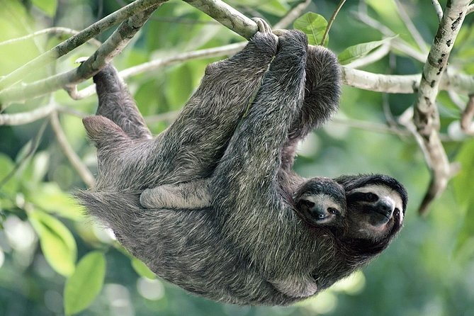 Sloth Encounter Tour and Waterfalls in the Rain Forest of Costa Rica