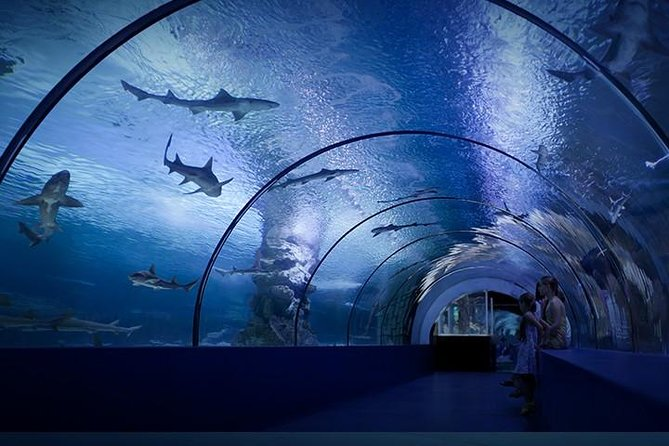 Skip the Line: Antalya Aquarium Ticket with Optional Transfer