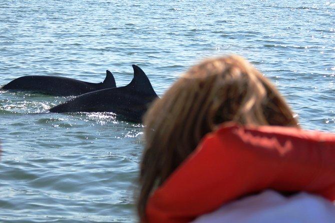 Wild dolphins encounter & snorkeling at Los Arcos