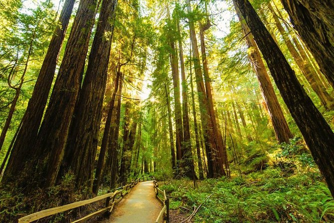 Bike the Golden Gate Bridge and Shuttle Tour to Muir Woods