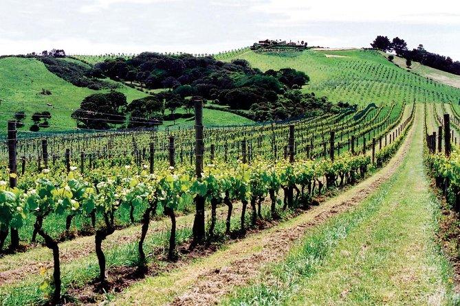 Waiheke Island Wine Tasting Tour