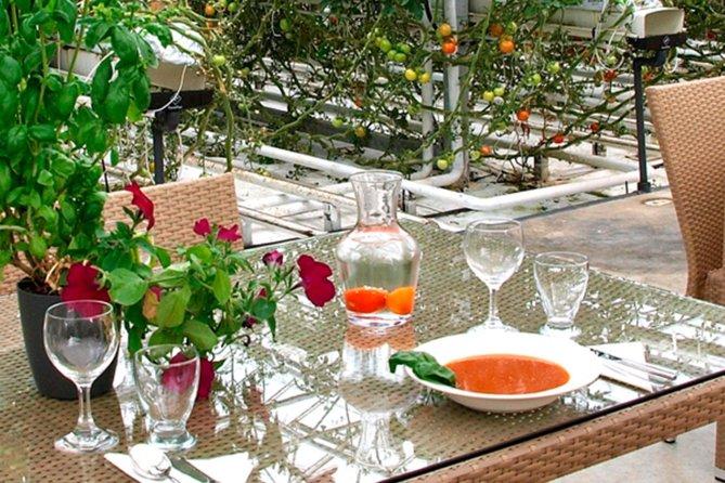 Golden Circle Platinum Secret Lagoon and Friðheimar Tomato Greenhouse Lunch