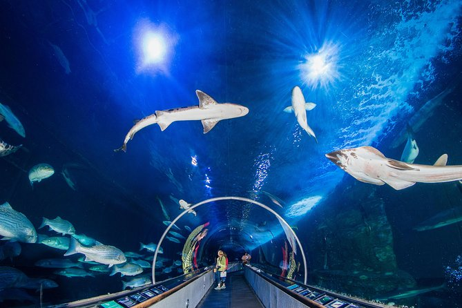 Aquarium of the Bay General Admission Ticket