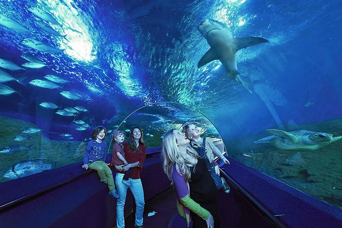 Private Rio de Janeiro Marine Aquarium (Aquario) Tour for Kids and Families