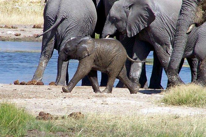 3-Day, All-Inclusive Etosha Wildlife Safari in Namibia