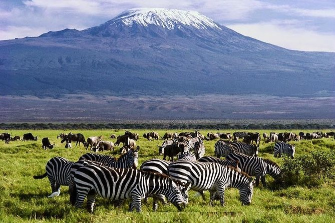 3 Days Amboseli & Tsavo East Safari