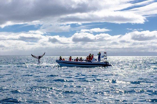 Small-Group Reykjavik RIB Whale Watching Cruise
