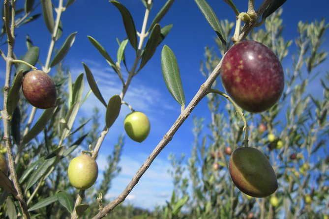 Small-Group Half-Day Languedoc Wine and Olive Tour from Montpellier