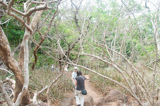 Rincon de la Vieja Hiking Tour and Waterfalls