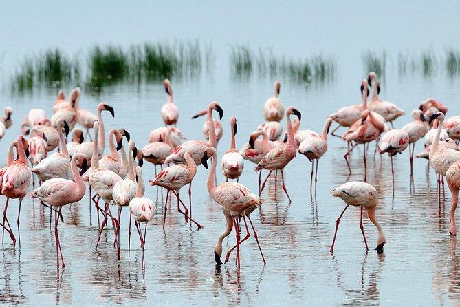 Private Lake Nakuru Day Trip From Nairobi