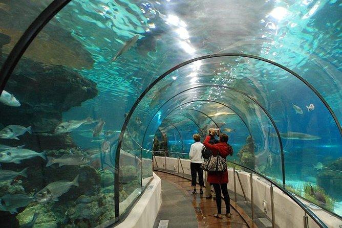 Túnel subaquático do Recinto Oceânico - O maior tanque do AquaRio
