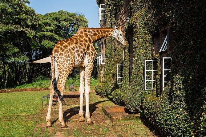 Best cultural day tour maasai village,David shed-rick and Giraffe center