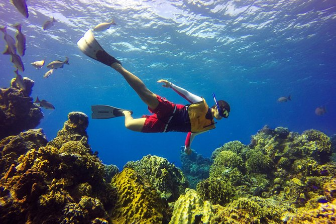 Cozumel Snorkel Tour: Coral Reefs, el Cielo & Beach (Hotel Pick up)