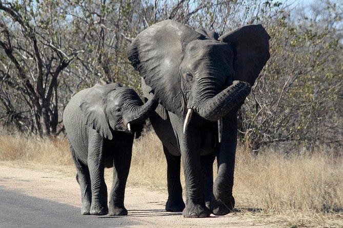 Kruger National Park - 1 Day (Open Vehicle)