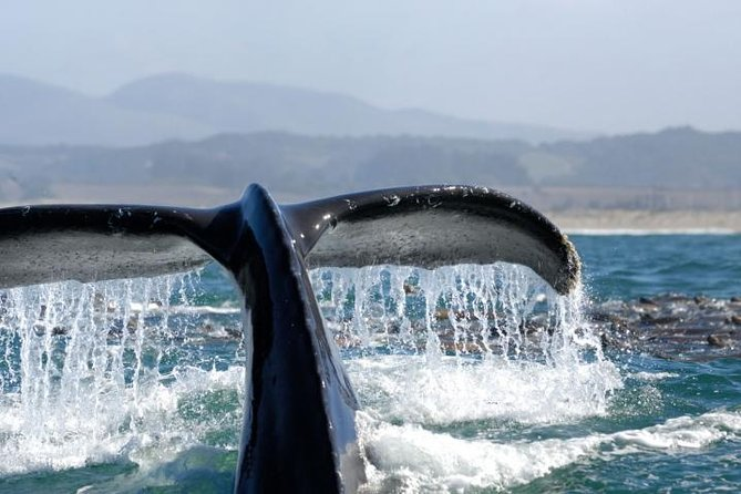 Whale Watching Cruise Los Angeles, Santa Monica, Newport Beach, Marina Del Rey